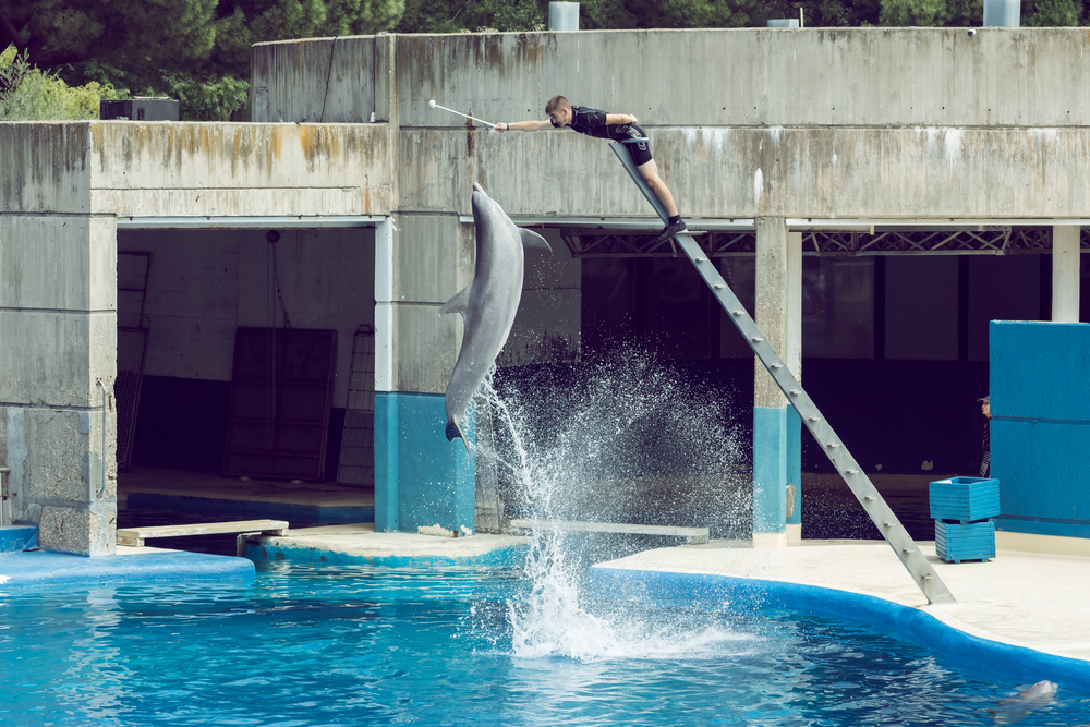 Delfín saltando en espectáculo de Zoo de Madrid