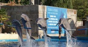 Delfines saltando durante espectáculo en Zoo Aquarium Madrid