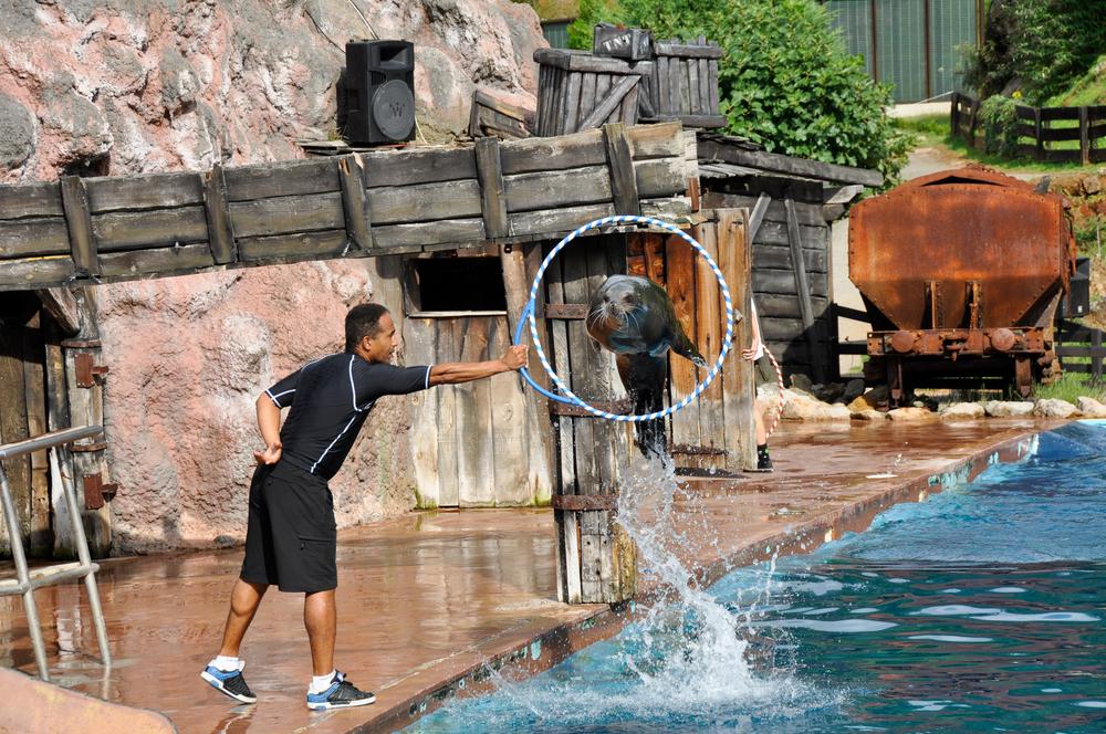 Espectáculo leones marinos en Zoo de Madrid