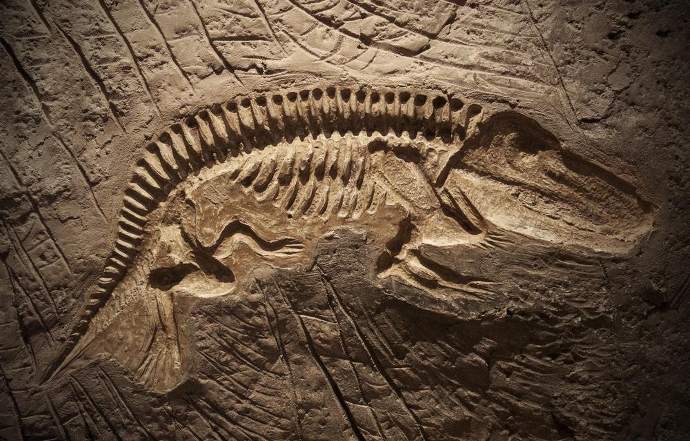 Detalle fósil animal prehistórico useo CC. Naturales Madrid